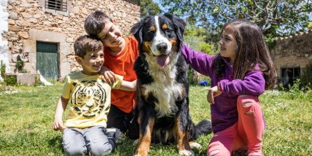 Arrangement for Kids & Pets