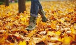 7 Tips for Moving During Fall Season