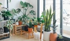 How to Move Plants when Moving with Households?