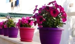 How to Protect Your Flower Pots During the Moving Process