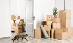 Moving with Cat Cross Country - Tips and Advice